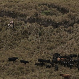 Rodeo (Cattle Drive) 7D/6N